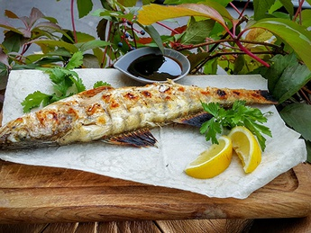 Grilled pike perch