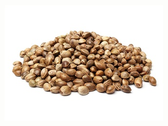 Семена каннабиса 1 кг.