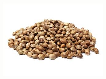 Семена каннабиса 300 гр.