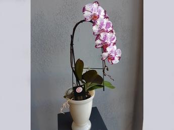 Орхидея Magic art