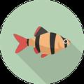 Pește