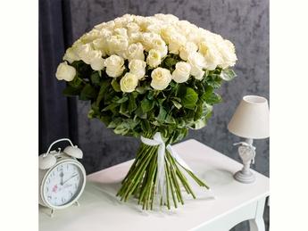 White roses  80-90 cm