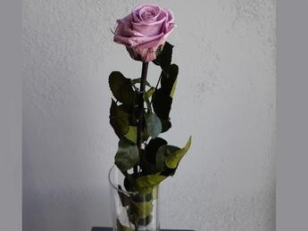Mov cryogenic Rose